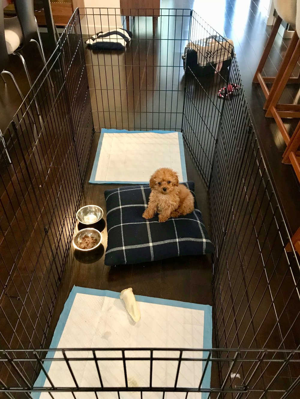 How to prevent separation anxiety: Keeping a puppy in a playpen is helpful for teaching it to spend time by itself.