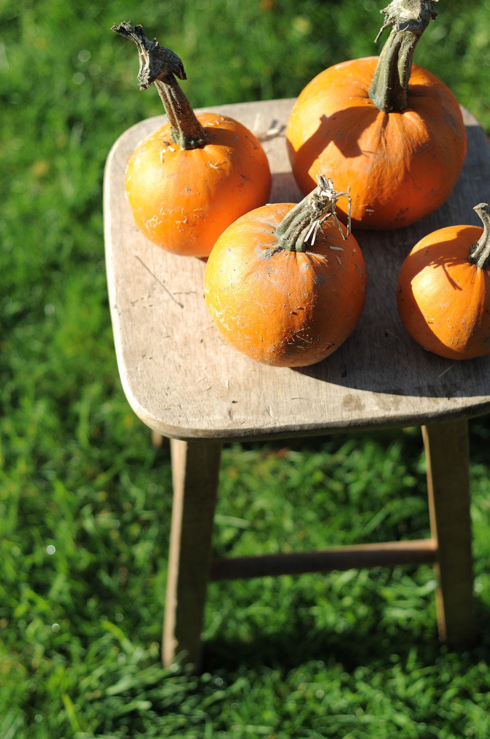Hedin Pumpkin Patch 13.jpg