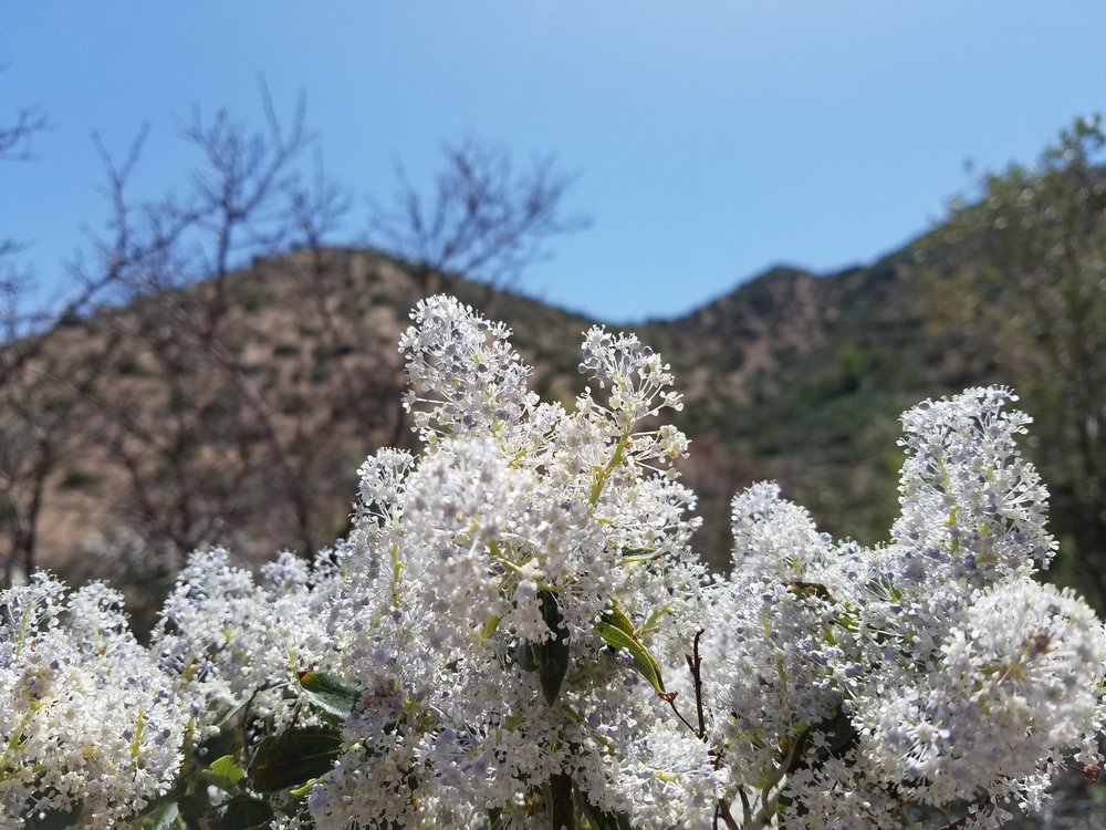 Some purdy flowers along the way. They smelled amazing! Lots of bees to compete with though...