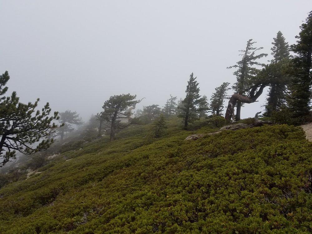 Cloudy, windy, rainy top of Mt. Williamson.