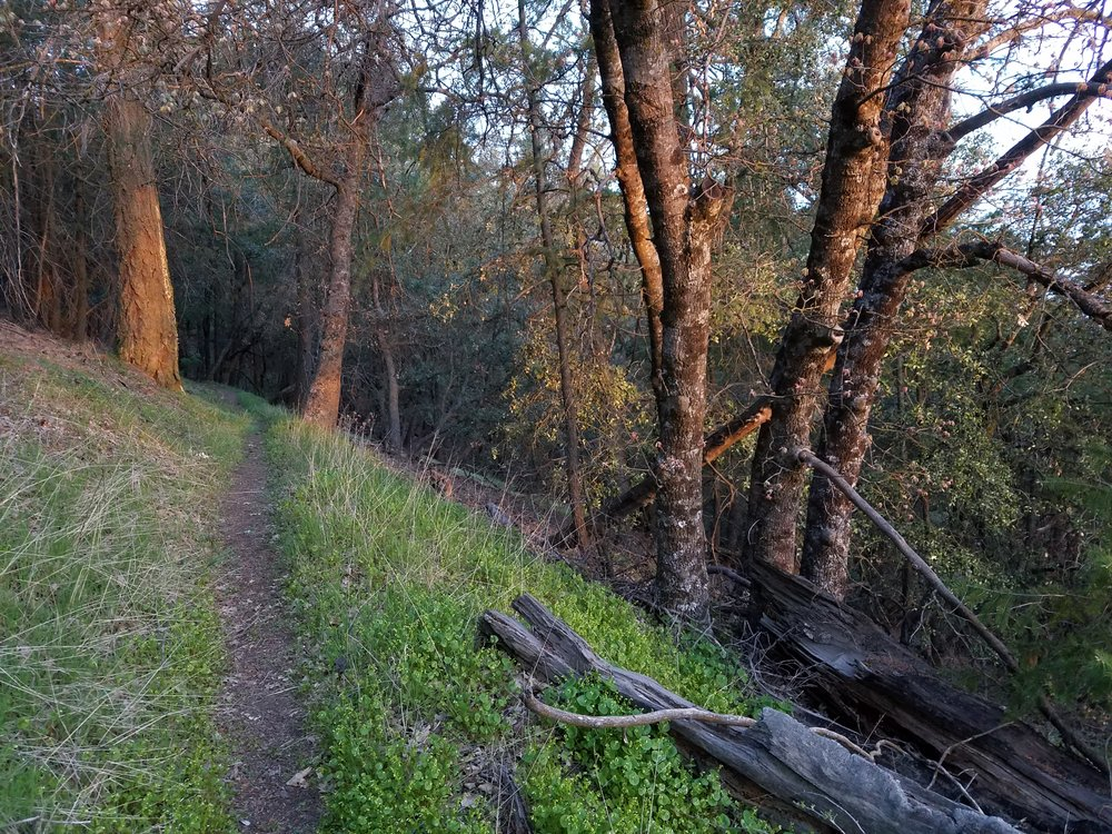 Dawn along the trail. No more monsters for this guy.
