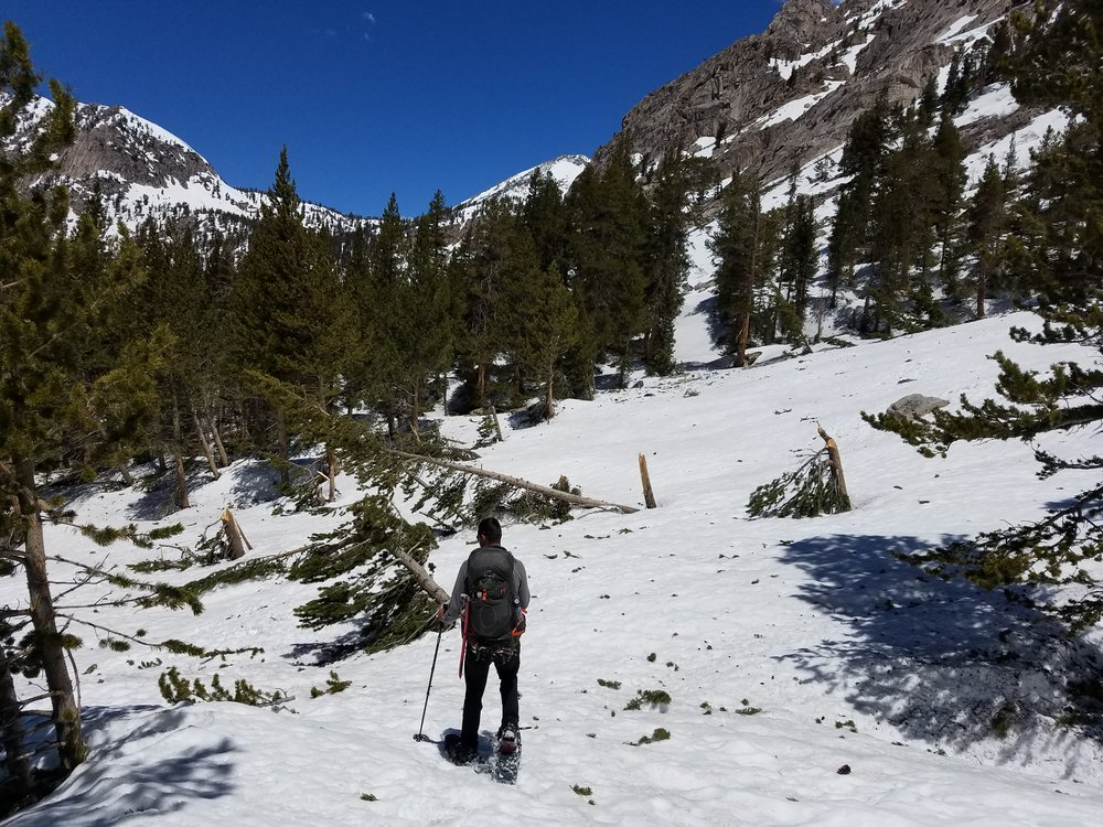 Wandering through the avalanche zone graveyards...