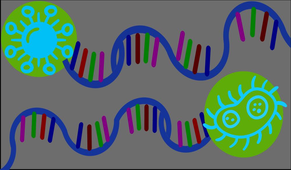 RNA recolor.png