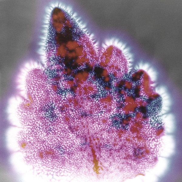 Krilian Photograph of a Coleus Leaf by MrX