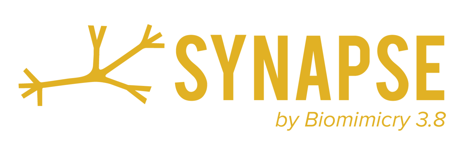 SYNAPSE by B3.8