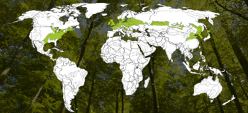 Temperate Deciduous Forest biomes around the world