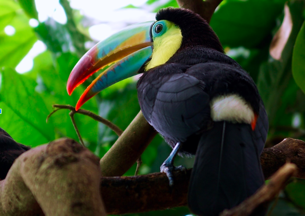 The toucan's beak is an example of light-weighting in nature (i.e., maximizing strength and resilience while minimizing material).