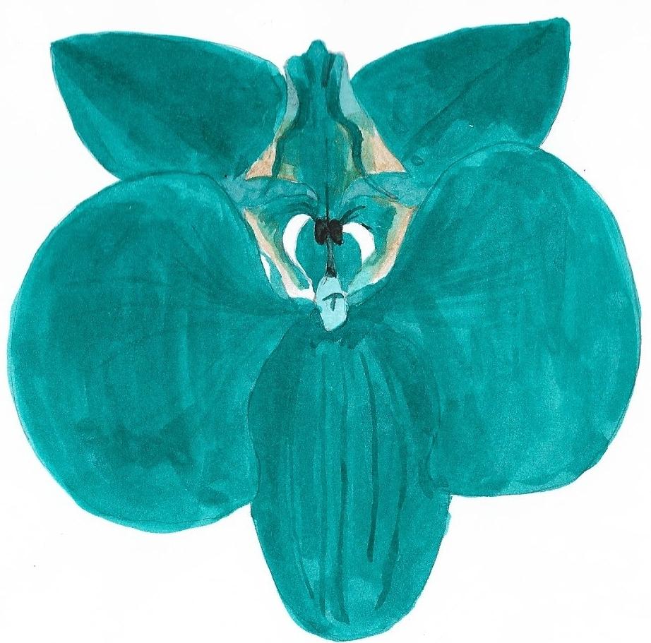 teal orchid.jpg
