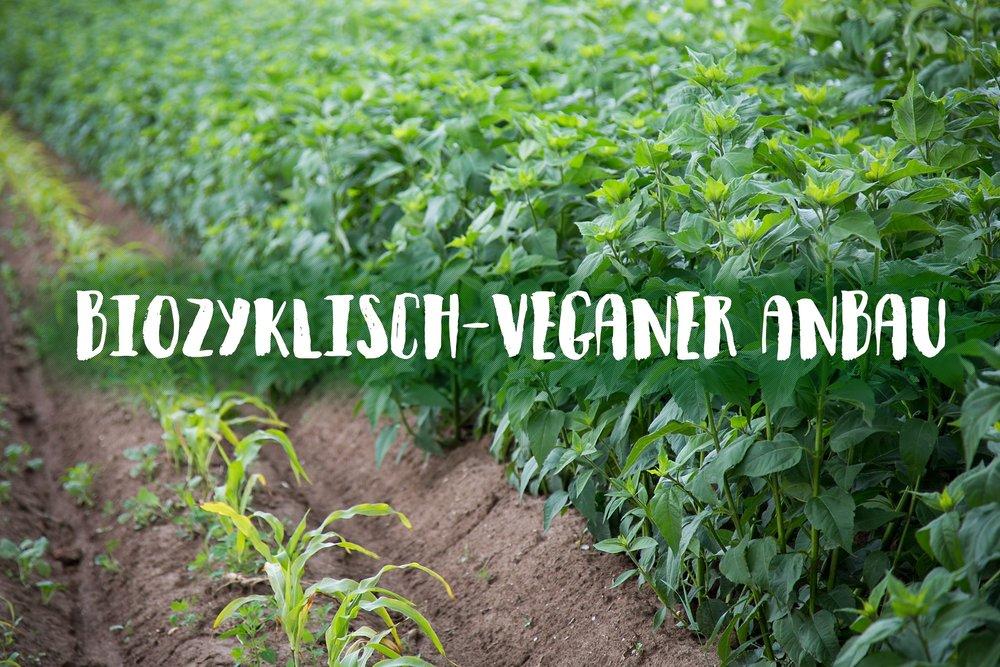 veganer anbau.jpg
