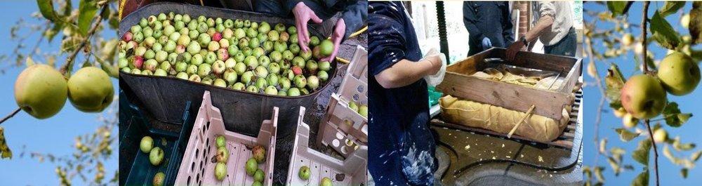 apple pressing.PNG