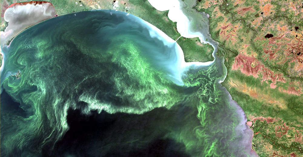 """Natural color composite of the North basin, Lake Winnipeg, August 2, 2017 at 10 m resolution. Green areas are algal blooms, dark areas are relatively clear water, bright areas are strongly reflective due to suspended sediments near the surface. Rivers from the east have pooled humic """"tea stained"""" water along the east shore. A rather striking, but unfortunate, image that speaks volumes about the state of our lake. Copyright: contains modified ESA data."""
