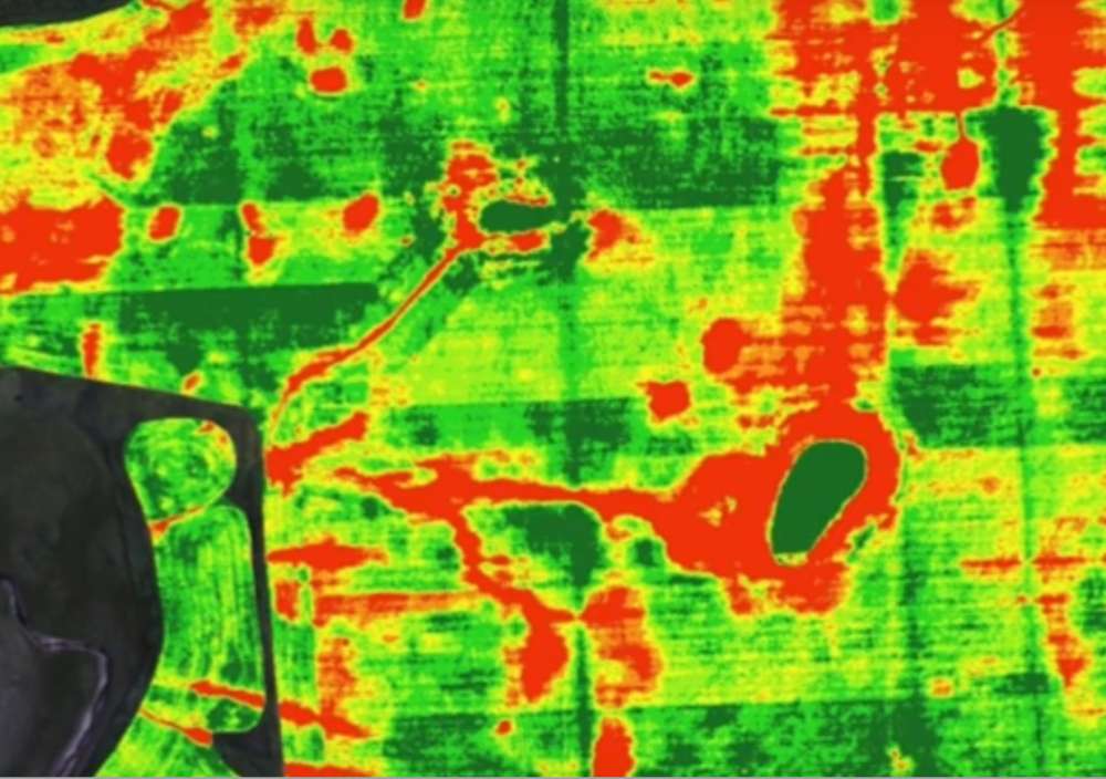 NDVI data collected by UAV at field scale.