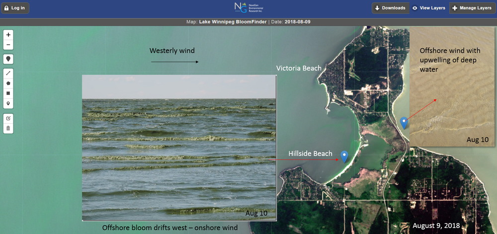 Satellite image August 9, 2028 showing how water movements influence the beach conditions. Beaches with onshore winds had abundant algae. In contrast, a beach 1 km away on the east side was a site of deep water upwelling of relatively clear water, which made for some great R&R for a couple of days. The algae most common to the lake in summer are buoyant so the water masses that upwell from the bottom remain relatively clear. Understand your lake and watch for upwelling events on BloomFinder!