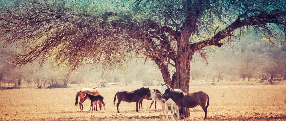 Artified Three Horses under tree - Copy - Copy - Copy - Copy - Copy - Copy.jpg