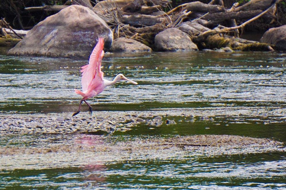 Flamingo at River - Copy - Copy - Copy - Copy - Copy - Copy.jpg