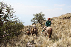 Horse & Rider on Trail - Copy - Copy - Copy - Copy - Copy.jpg