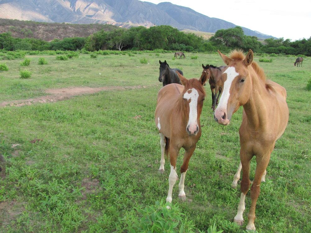 Horse with colt - Copy - Copy - Copy - Copy - Copy.jpg
