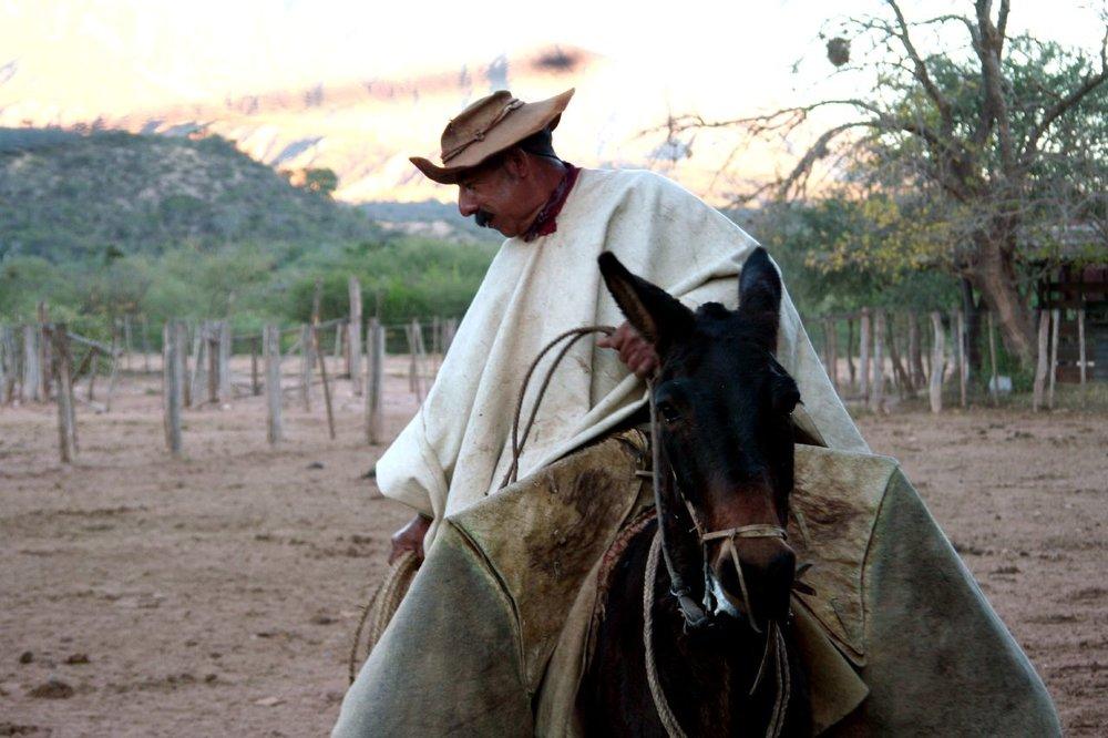 Old Gaucho by Vineyards - Copy - Copy - Copy - Copy.jpg