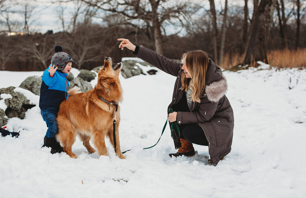 Family playing in the snow in Concord during portraits with Boston family photographer Joy LeDuc.