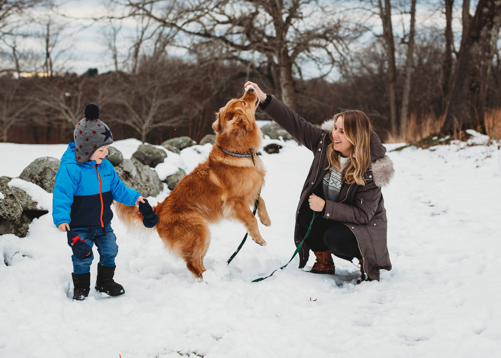 Mother and toddler playing with golden retriever in the snow at Old North Bridge. Concord family photography.