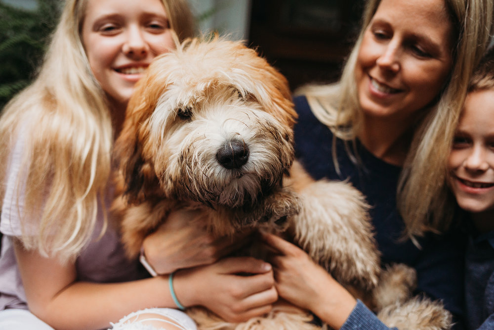 Pet portrait mini sessions for those who love their pets as much as I do! Boston family and pet photographer Joy LeDuc.