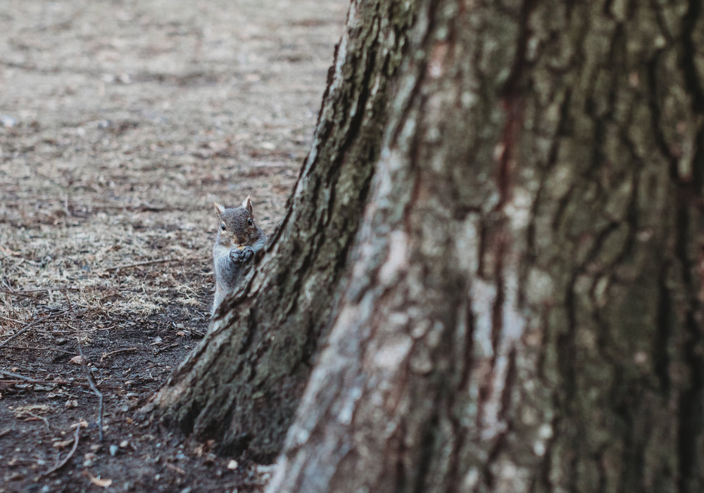 Playing hide and seek with the biggest squirrel I've ever seen. Boston family photographer Joy LeDuc.