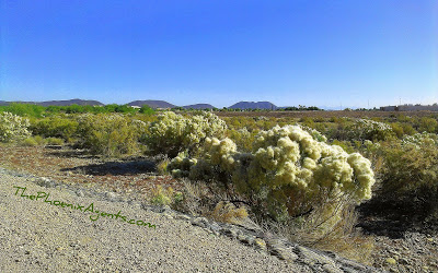 Desert Pollen in Phoenix AZ
