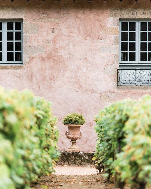 Vineyard and texture @lepoudrier  #vineyards #texture #weddingplanner #weddingvenue #fineart #fineartphotography #destinationwedding
