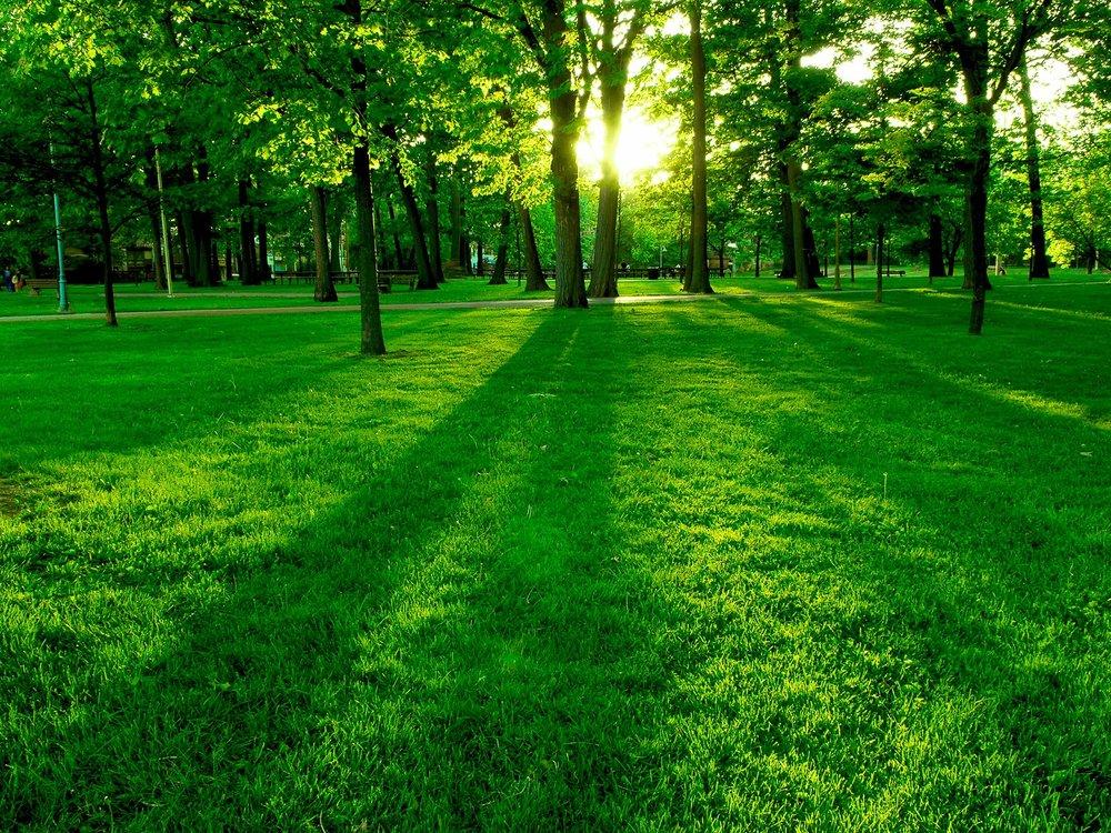 green walk.jpg
