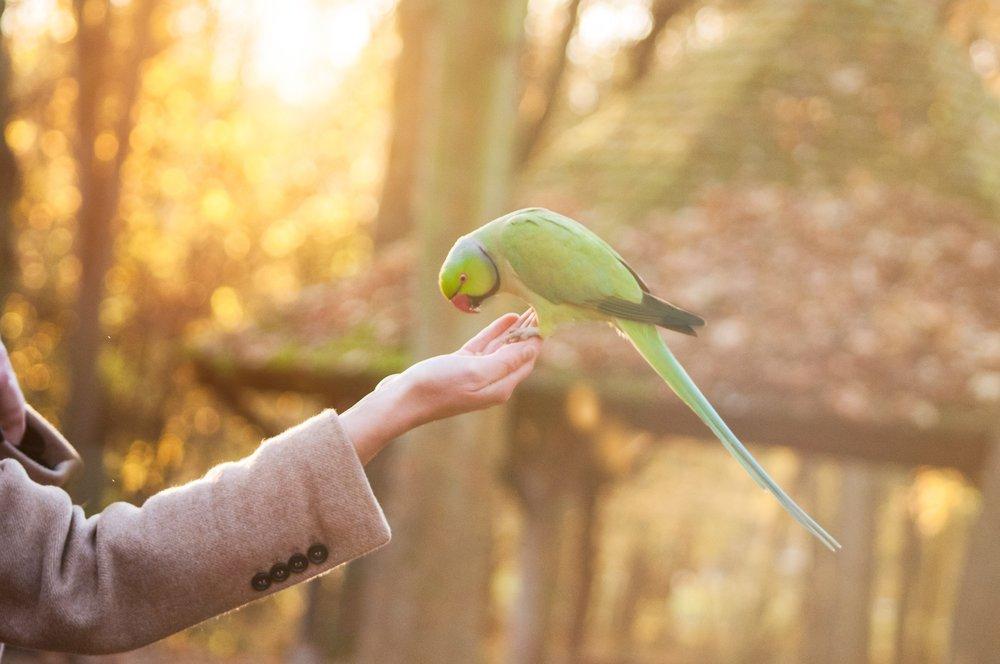 Except for parrots.  Photo by  Rachel Omnès  on  Unsplash