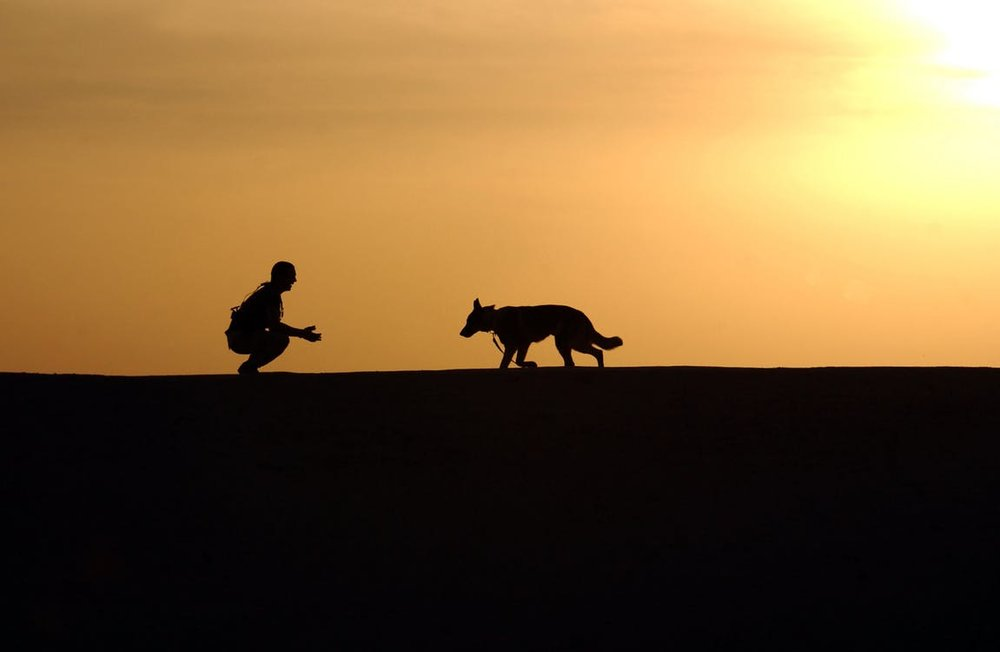 therapeutic-exercise-dog-training