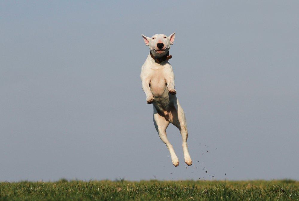 dog-training-joy-fun-159692.jpeg
