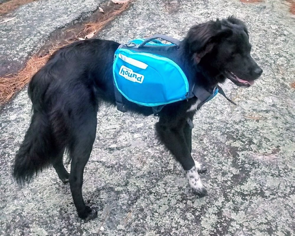emotional-support-animal-training