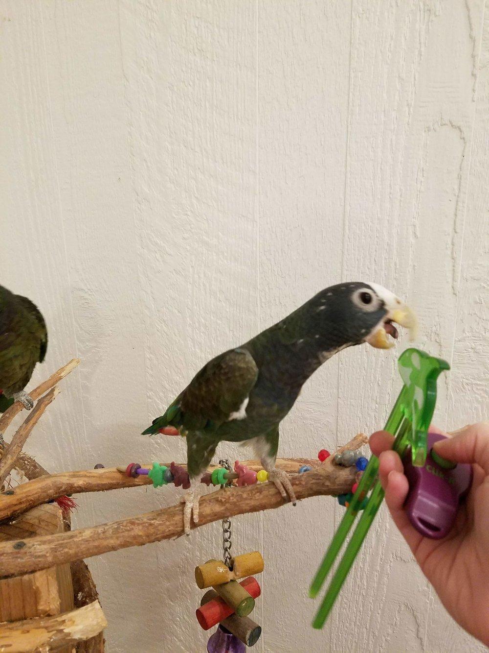 bamba-parrot-investigates
