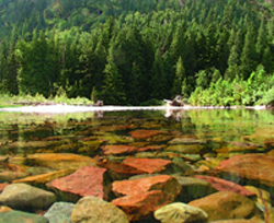 19 Fishing the Transitions_What Trout Can Teach You About Balancing Risk and Safety - C alt 250 x 204.jpg