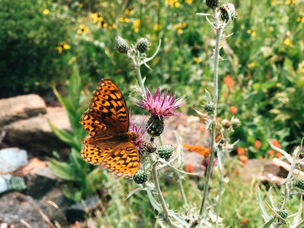 pretty butterfly & flowers bear a water source