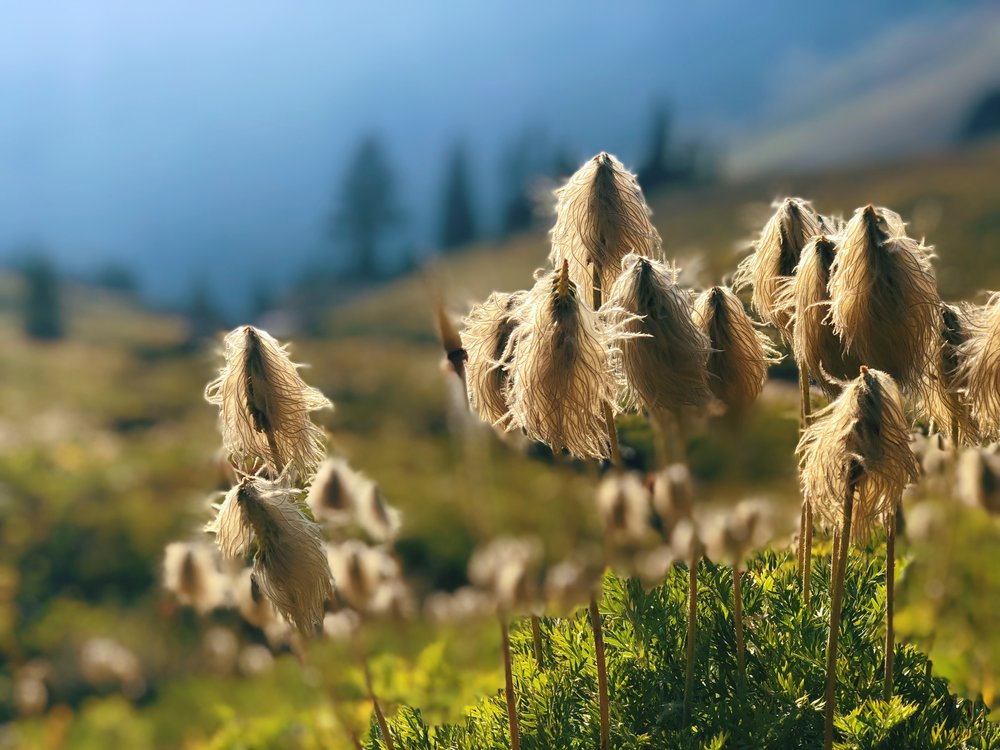 beautiful Dr. Seuss plants