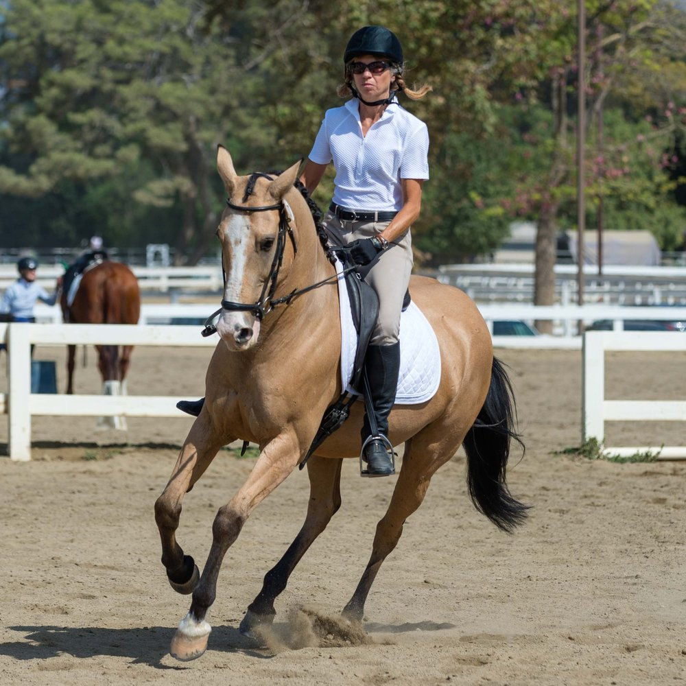 Flash - 2002 Azteca gelding owned by Julie Sheer. Currently schooling and showing at Training Level.
