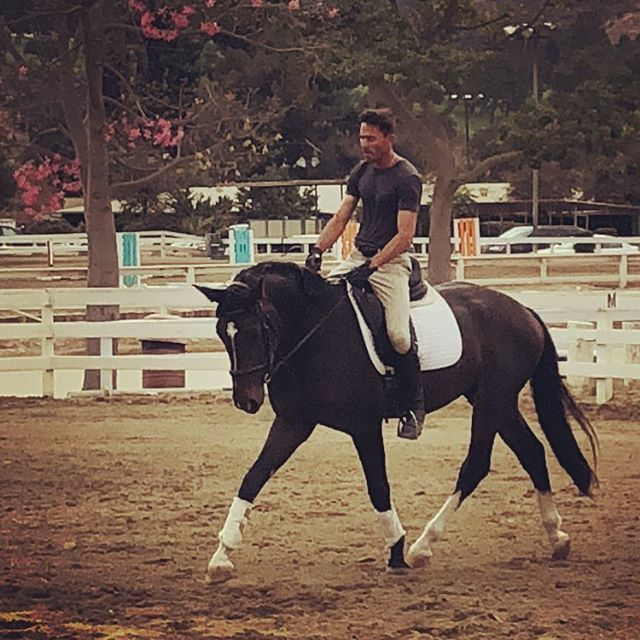 Raphael, coming along nicely! Couldn't be happier with this sweet gelding. #dressage #oldenburg #rotspon #learningtodance