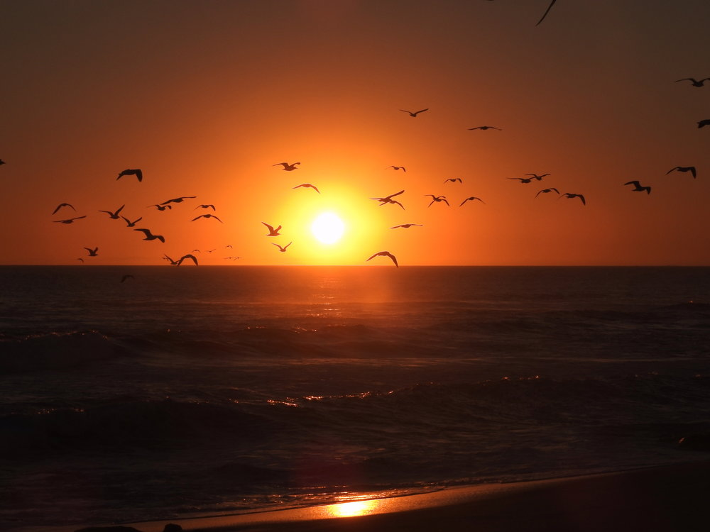 Birds over the ocean.jpg