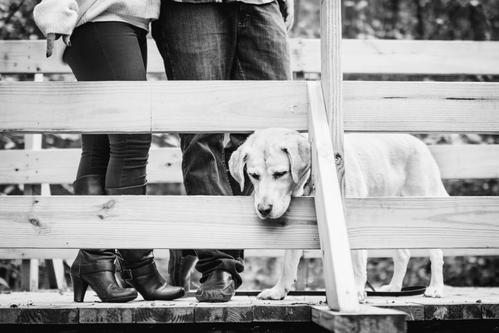 Photo of couples legs on bridge and their dogs head sticking through