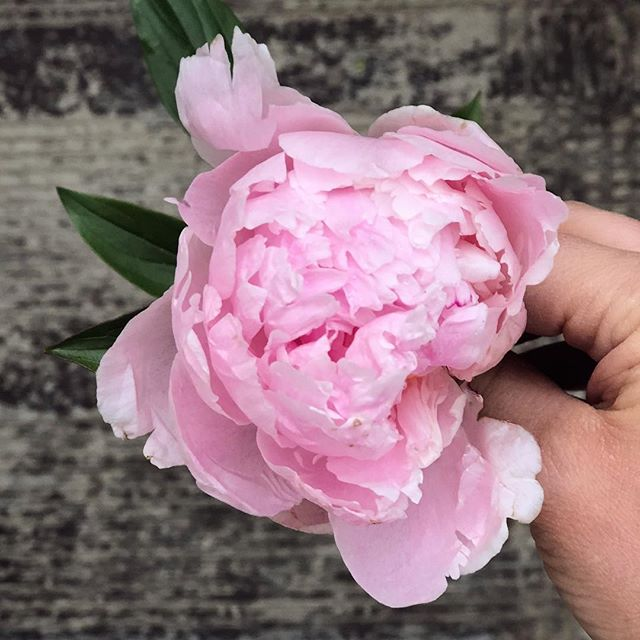 Happy Friday, friends! As wedding season is now in full swing, please be mindful to reserve your floral pickups at least two weeks in advance so we can coordinate with volunteers, florists and donor agencies 🌸🗓 - Visit our website or message us to book your pickup in advance so we can create the best experience possible for all involved! 🤗