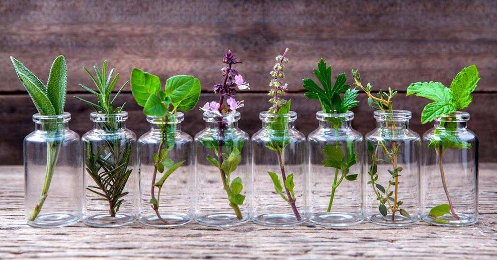 essential-herbs.jpg