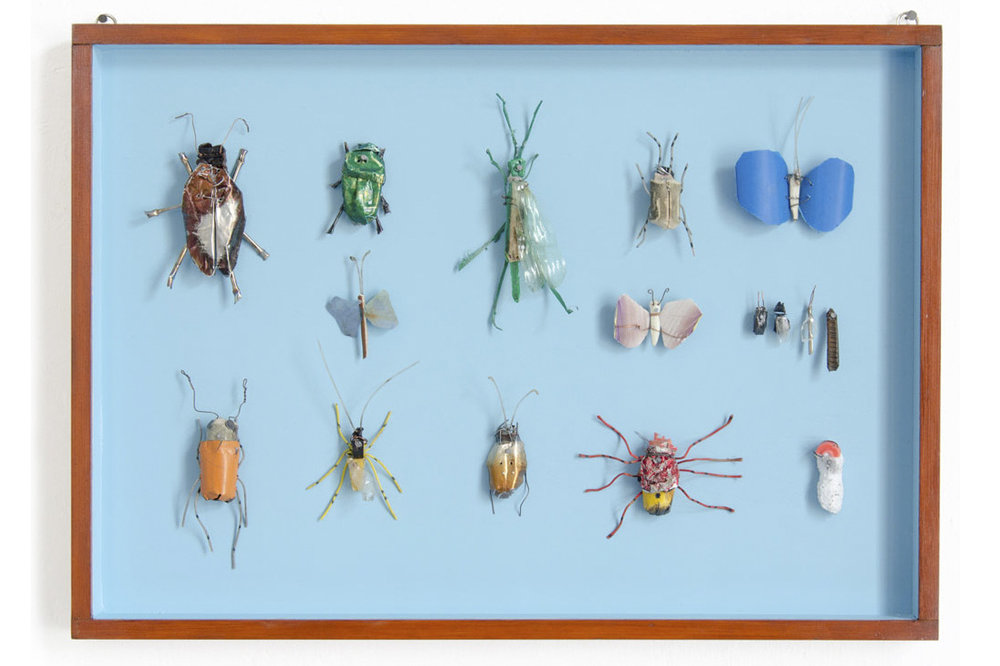 INSECT CASES, 2016