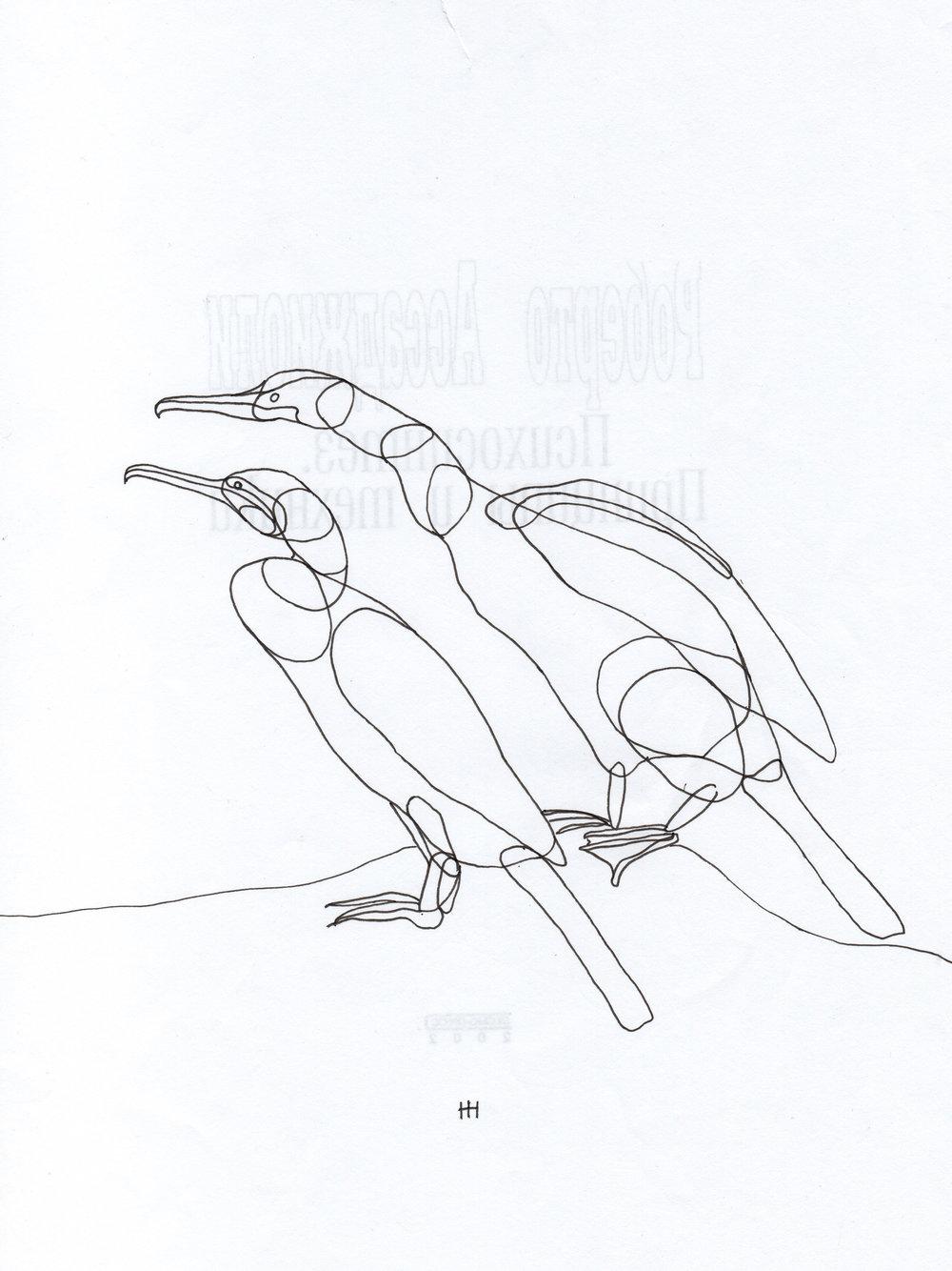PticyLinejnye_0 4.jpg