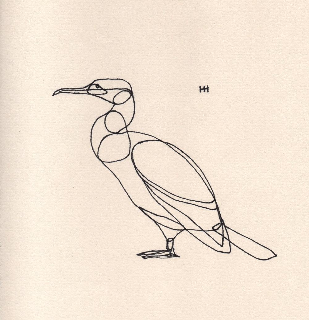 PticyLinejnye_0 6.jpg