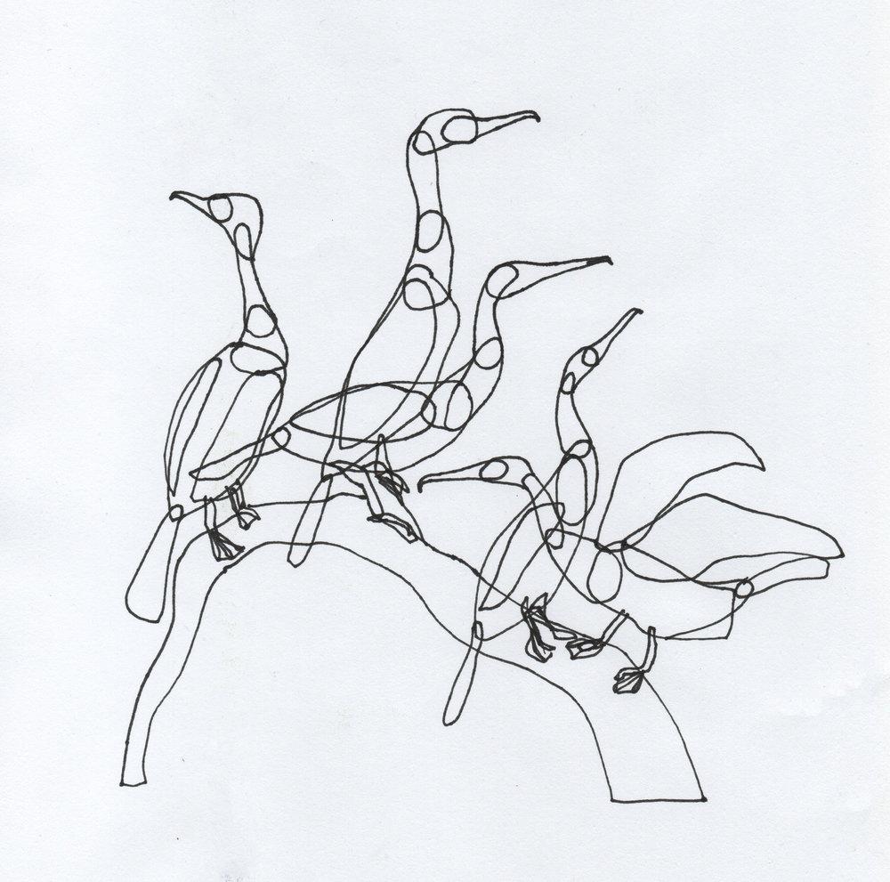 PticyLinejnye_0 14.jpg