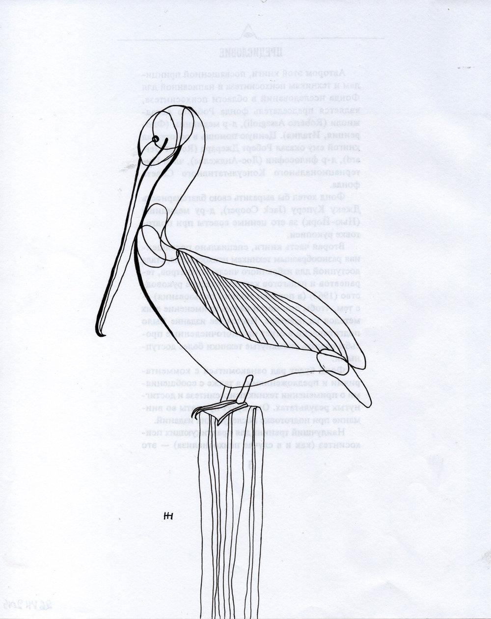 PticyLinejnye_0 30.jpg