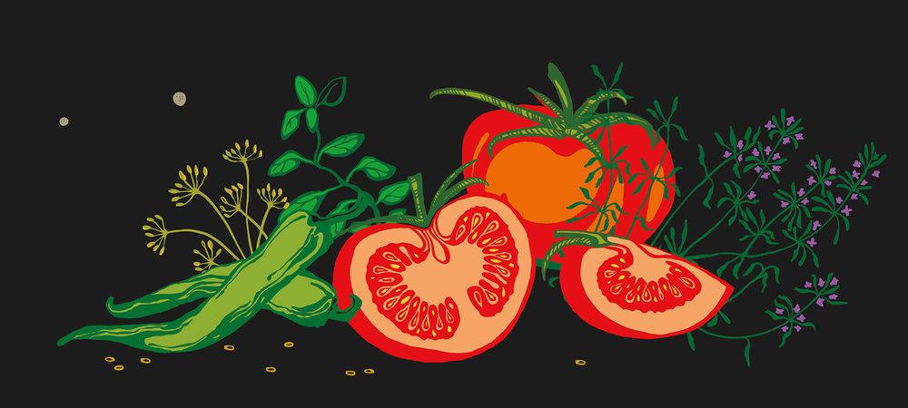 illustrations 6.jpg