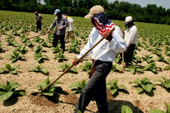 migraint-farm-workers.jpg